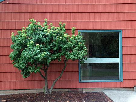 tree-banal.jpg