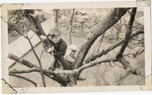 Once a tree climber...