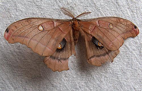 moth-07.jpg