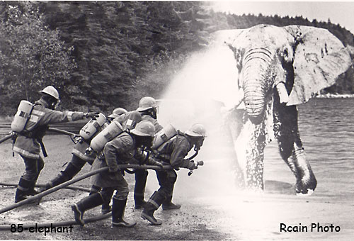 putting out the elephant