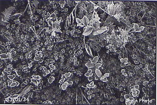 frosty tips 830134.jpg