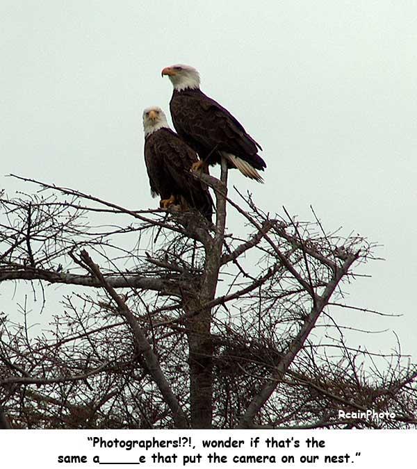 eagle-_talk3