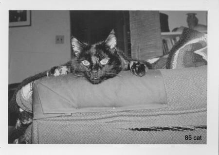 Kitty AKA