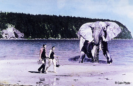 circus elephant takes stroll on Tribune Bay