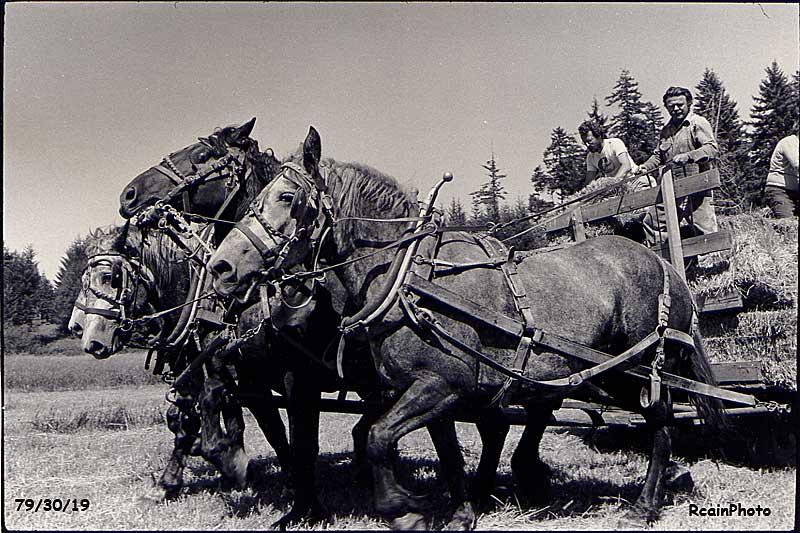 793019-cross-horses
