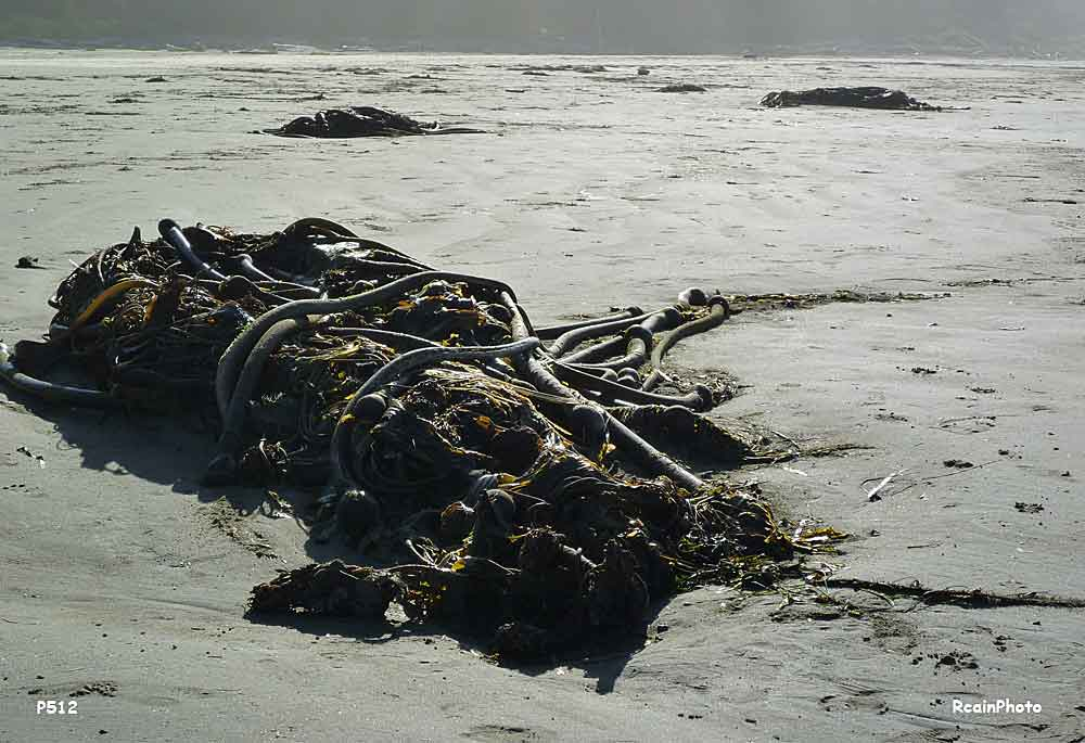 P1000512-seaweed2
