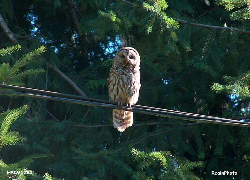 HPIM1281-owl