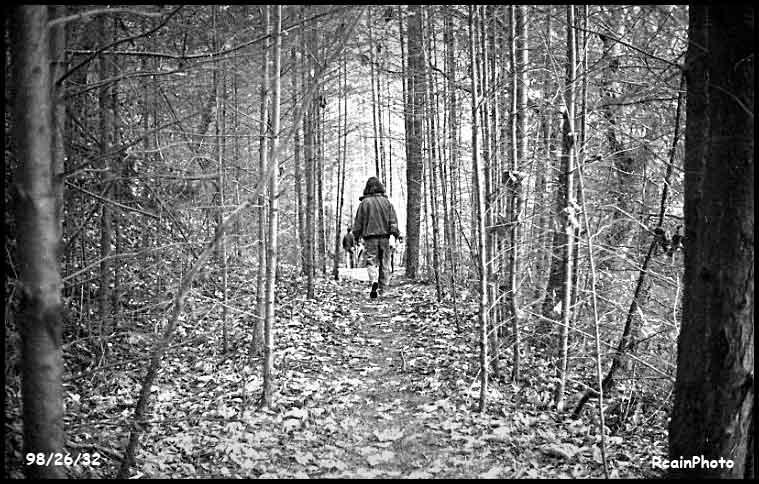 982632-woods