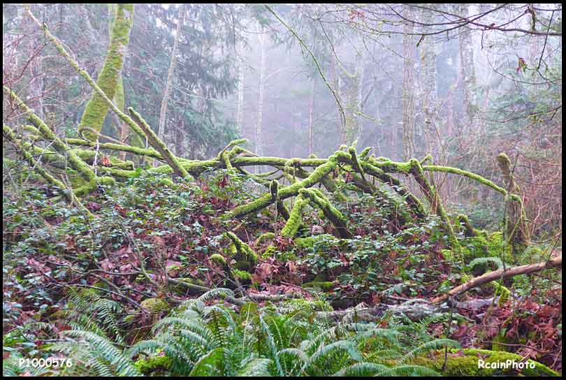 P1000576-trees