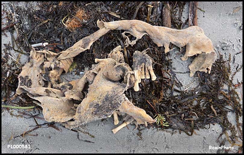 P1000581-skin_and_bone