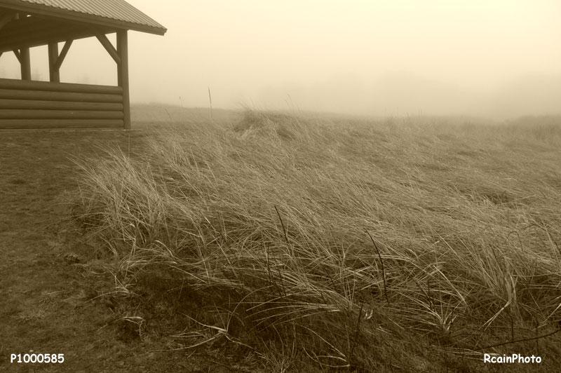 P1000585-tribune_fog