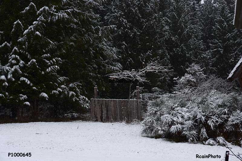 P1000645-snow