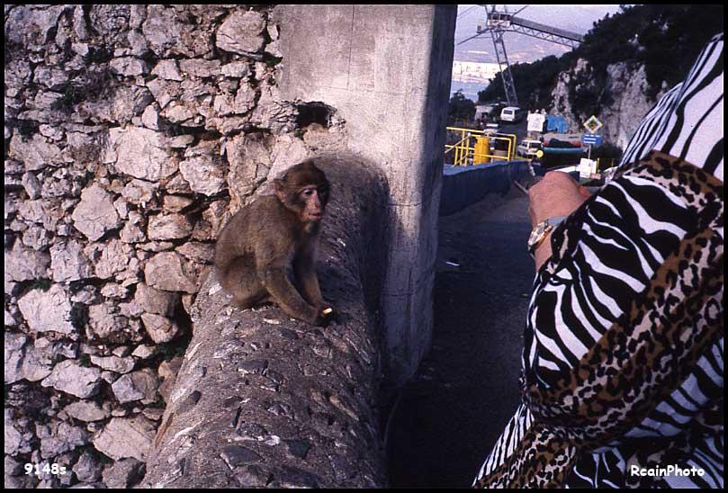 9148-slide-monkey