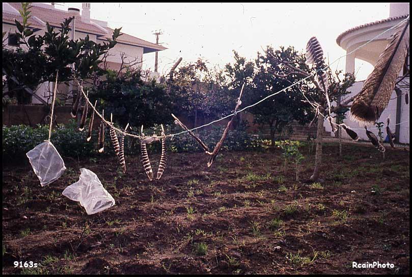 9163-slide-Garden-portugal