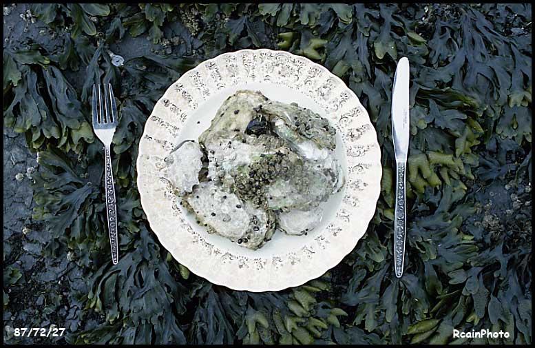 877227-oyster_dinner