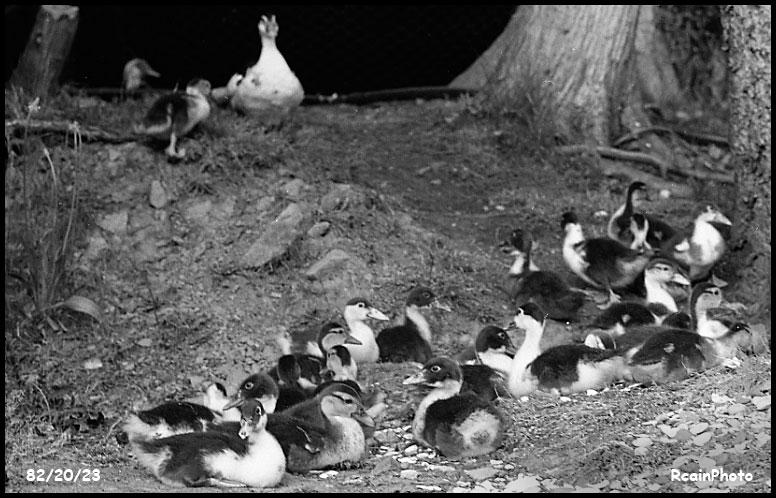 822023-ducks