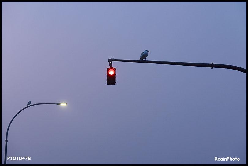 P1010478-seagulls