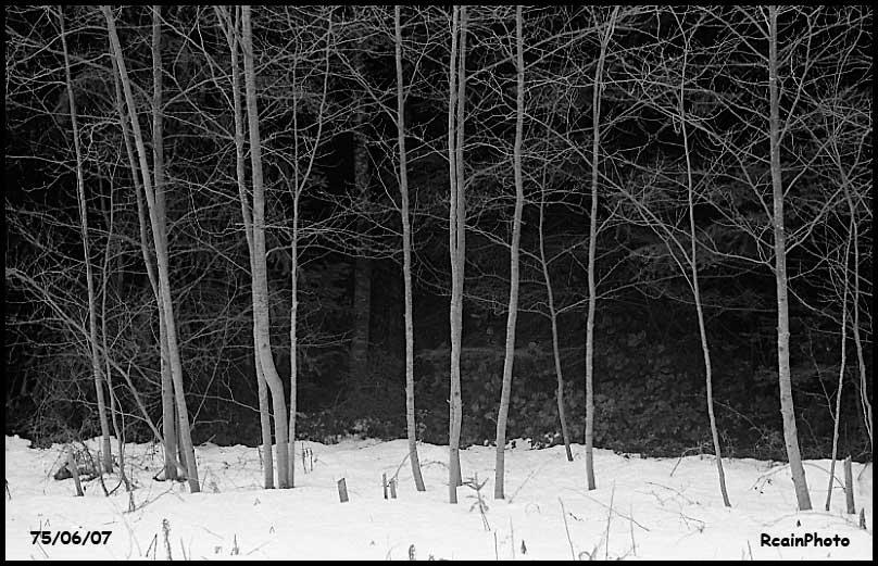 750607-trres-in-winter