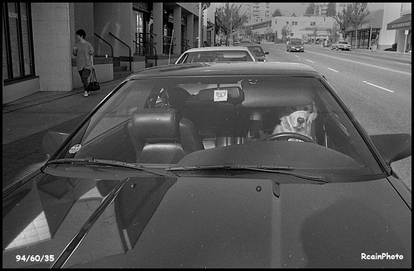 946035-dog-in-car