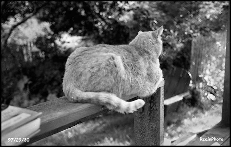 972930-ed-the-cat