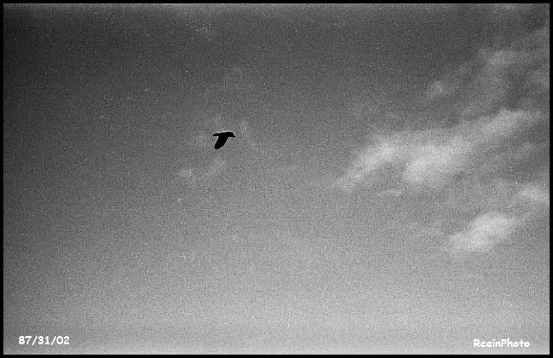 870132-raven