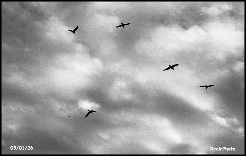 030126-helliwell_clouds,birds