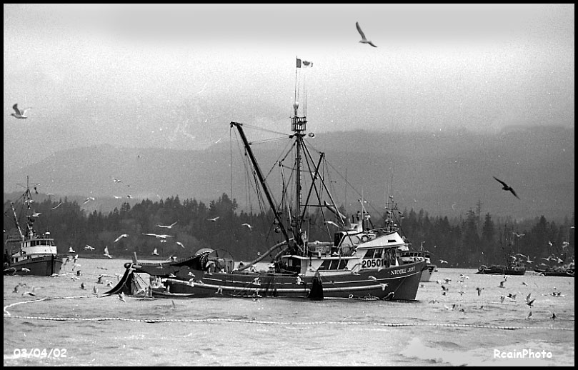 030402-herring
