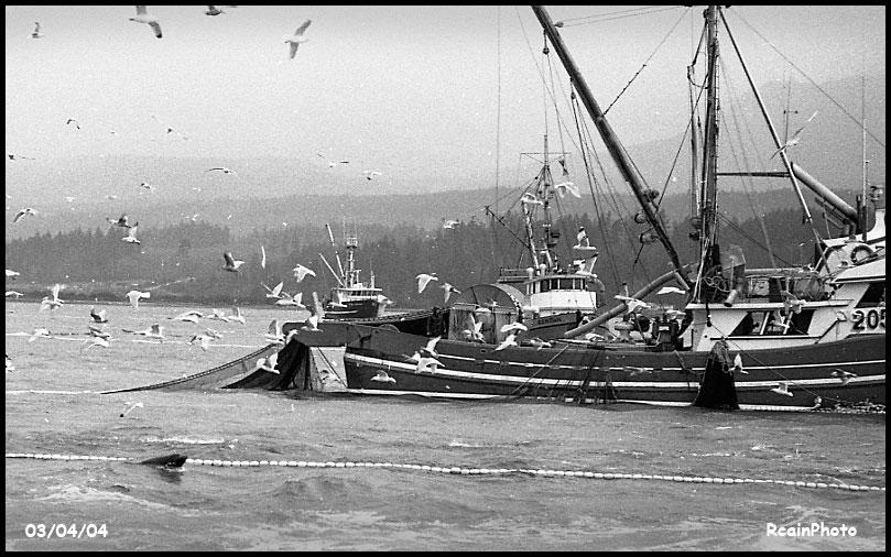 030404-herring