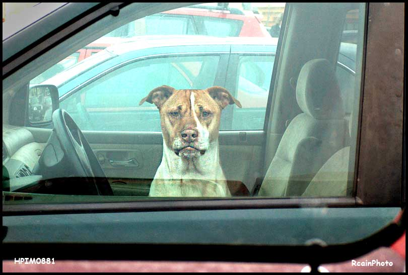 HPIM0881-dog-in-car-feb_2007