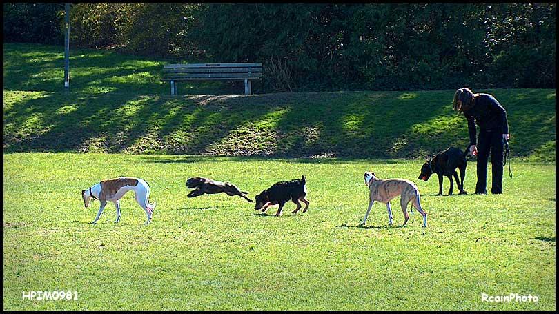 HPIM0981-dog-park,mar-2007