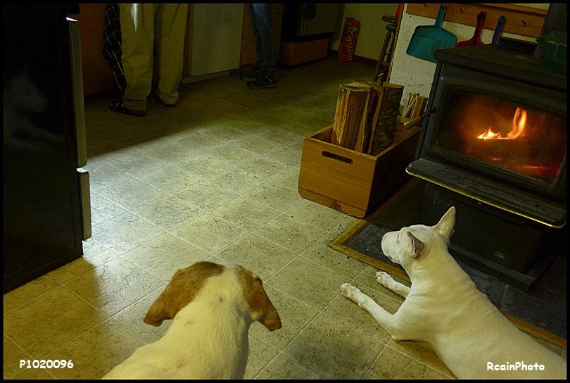 P1020096-karlas-dogs