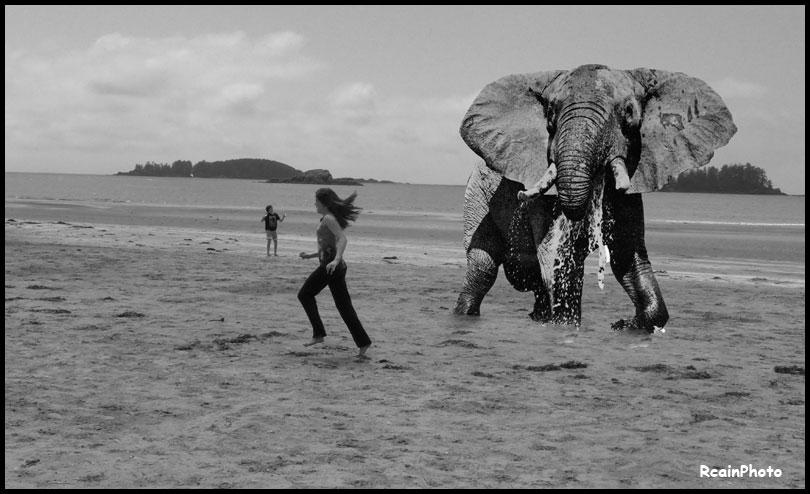 chloe,logan.elephant