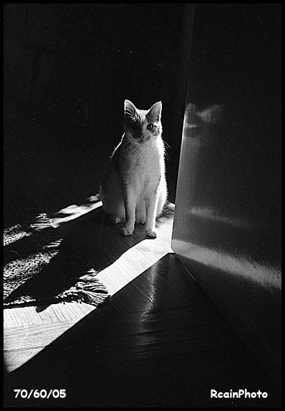 706005-cat