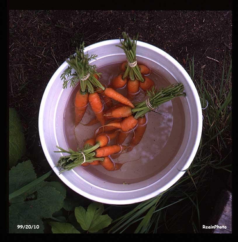 992010-garden-carrots