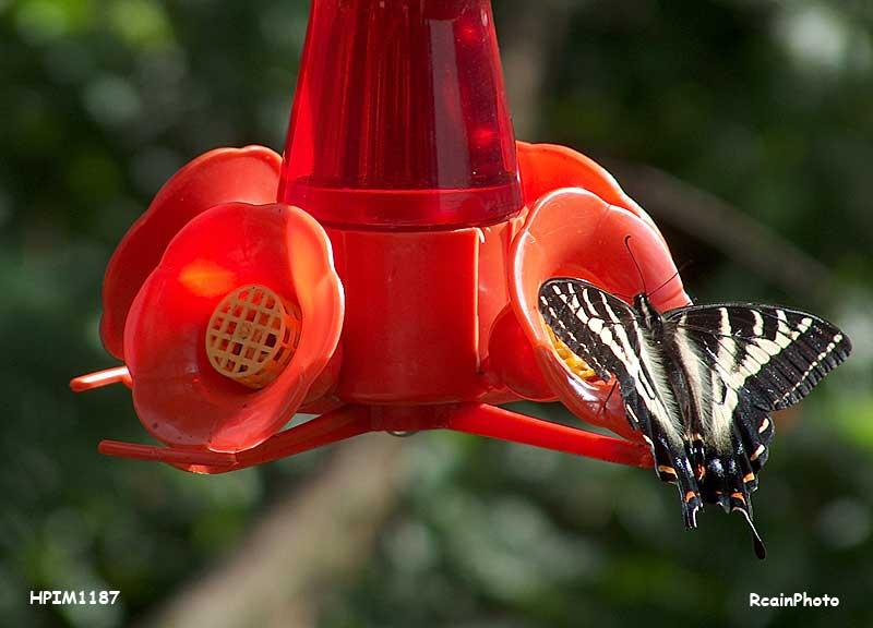 butterfly-2007